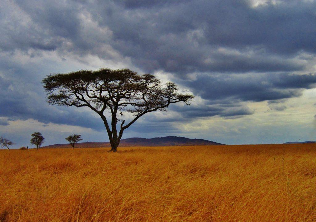 parcs de tanzanie et reserves naturelles