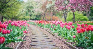 prendre soin de votre jardin