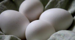 les œufs entiers en liquide